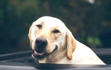 犬のスマイル